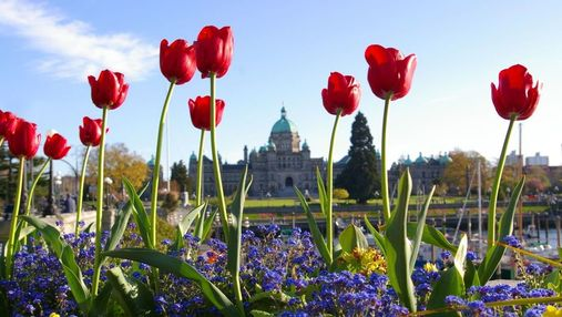 Tulips in front of the BC Legislature
